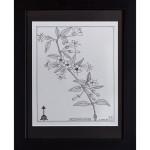 Flowering Shrub Drawing India Ink on Handmade Paper
